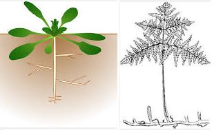 13.10.7. racines