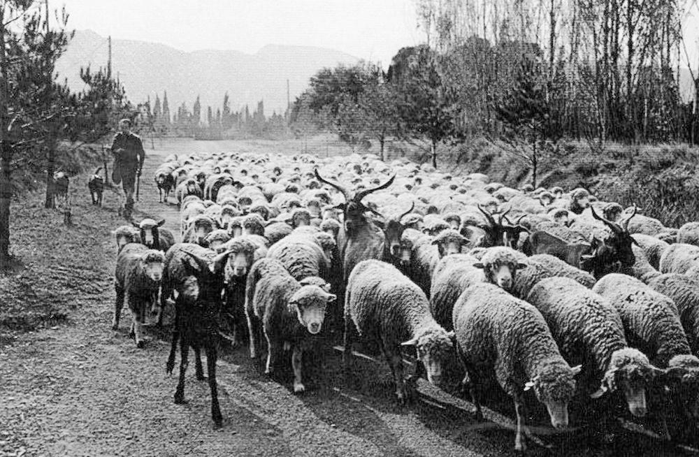 14.8.1. compter des moutons